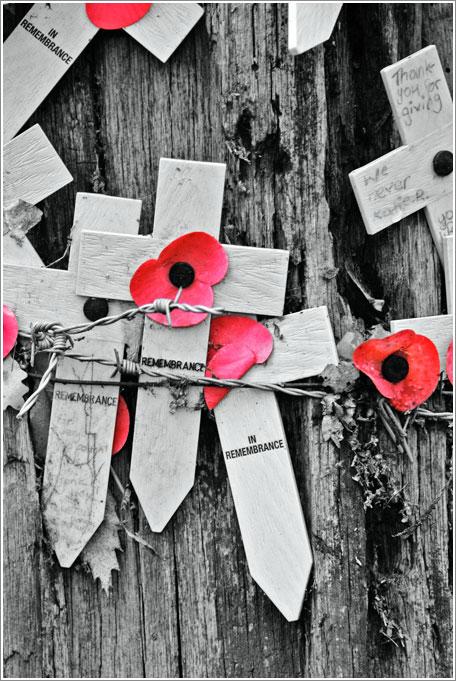 Poppies and Crosses. Photo: Jean Crankshaw.