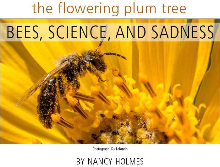 The Flowering Plum Tree:  Bees, Science, and Sadness • by Nancy Holmes. Photograph: Dr. Lalonde.
