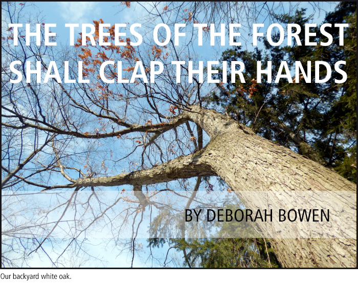 The trees of the forest shall clap their hands • by Deborah Bowen