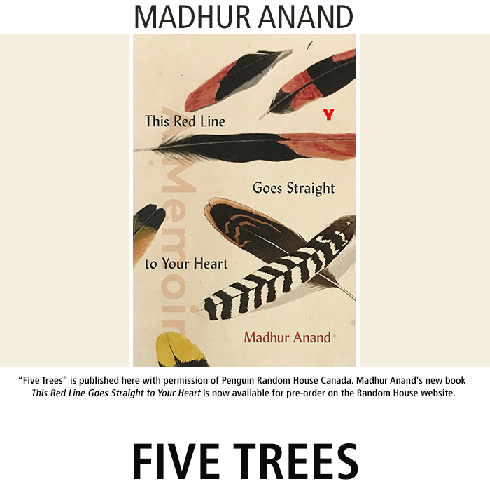 Five Tree by Mahur Anand